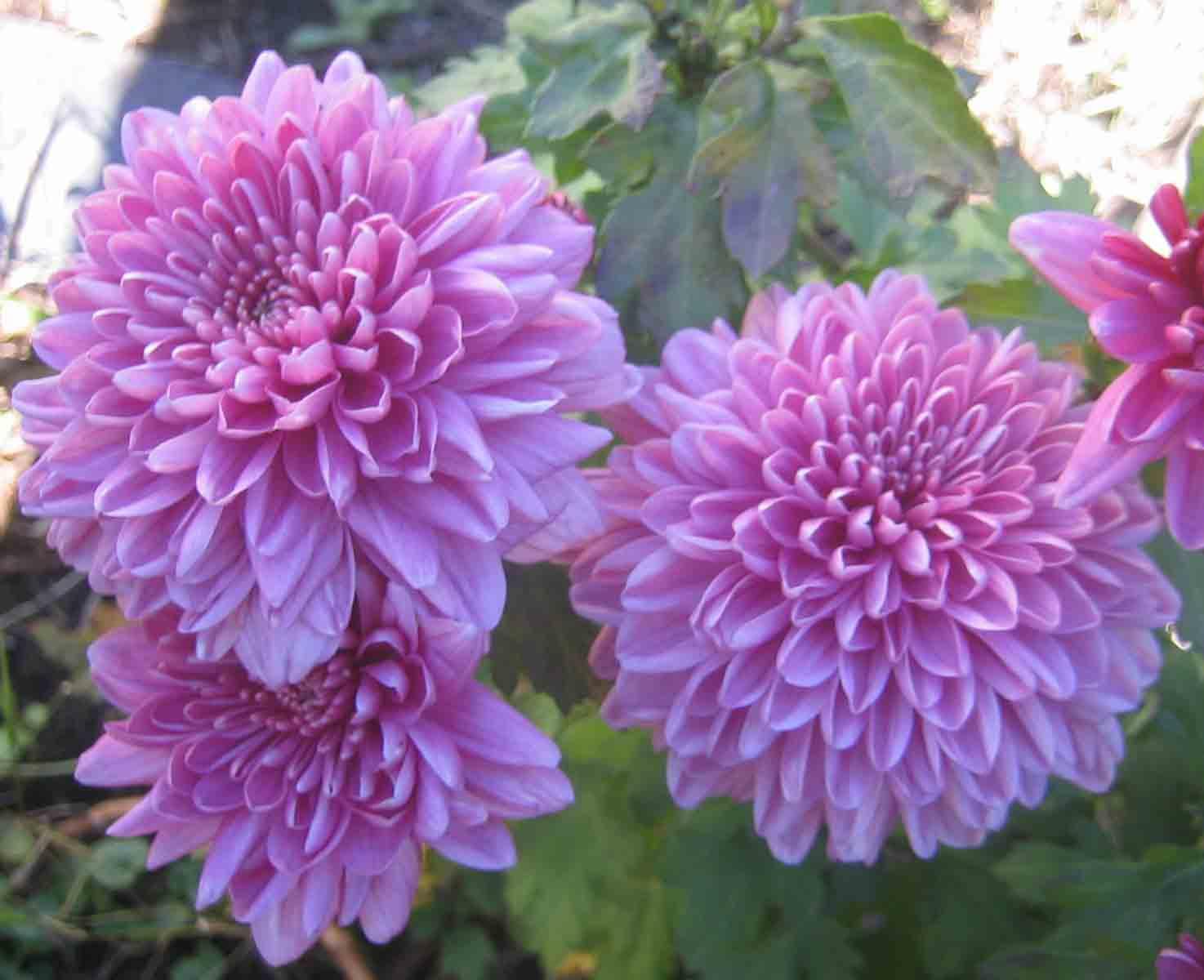 Flores de janeiro a dezembro 32